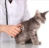 Ветеринарные клиники в Повенце